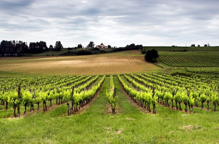 aquitaine: Aquitaine vineyard in France in springtime Stock Photo