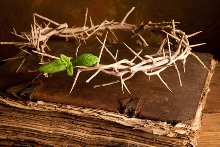 crown of thorns: Semana Santa con la imagen de la Corona de espinas y hojas verdes de la esperanza Foto de archivo