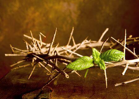 doornenkroon: Pasen afbeelding met doornen kroon en groene blad van hoop Stockfoto