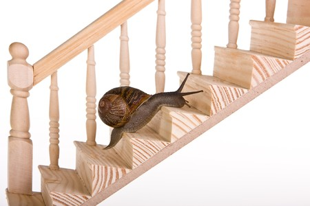 upward struggle: Funny snail trying to climb wooden stairs