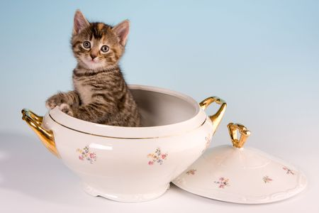 Funny image of a gray kitten in a soup tureen Stock Photo - 4691441
