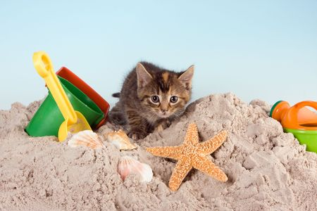 cat toy: Six weeks old kitten playing in sand