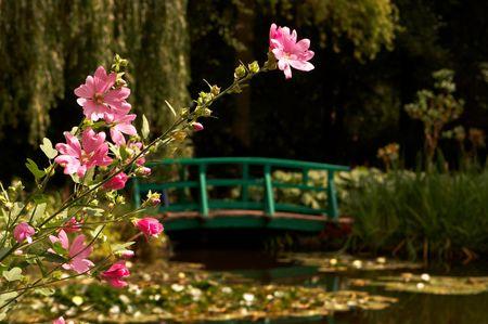 monet: El jard�n y el estanque del famoso pintor Claude Monet, donde pint� sus nen�fares Foto de archivo