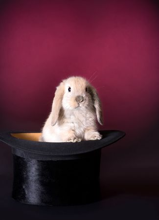 Adorable easter rabbit in a magicians hat Stock Photo