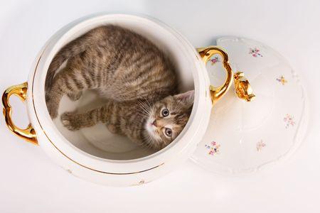 Funny kitten having fun in a soup tureen Stock Photo - 4869791