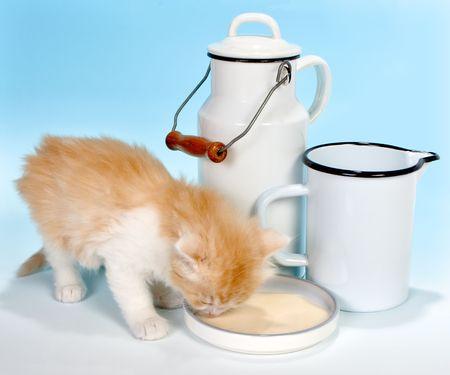 Six weeks old red kitten drinking milk Stock Photo