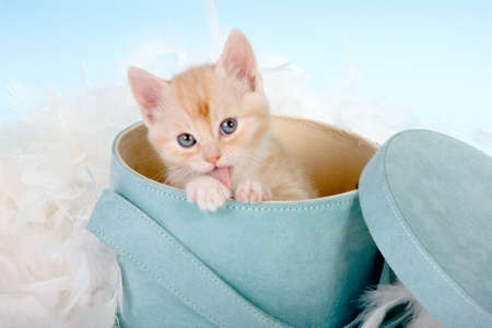 Six weeks old red kitten in a hatbox photo