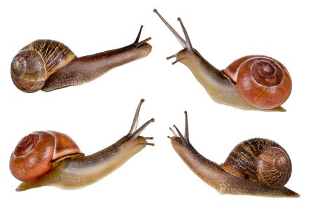 slimy: Combi image of four isolated garden snails