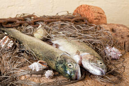 floaters: Fresh fish caught with a fishing net Stock Photo