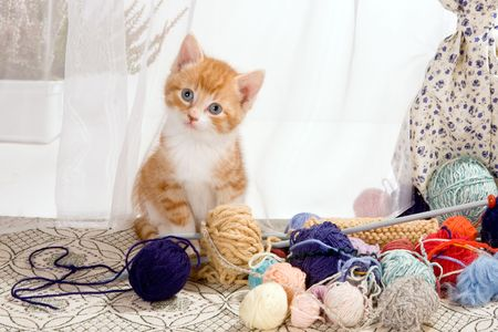 Six weeks old kitten being naughty with knitting wool