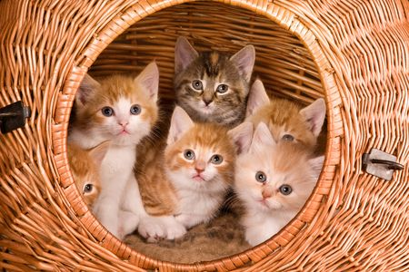 Family of six kittens in their own basket photo