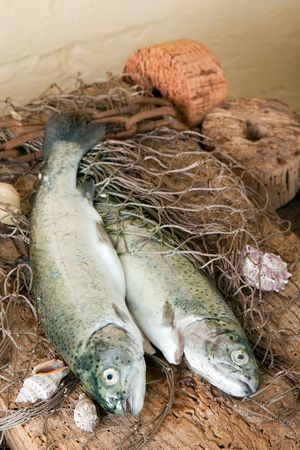 floaters: Freshly caught fish lying on a wooden board with fishing nets and floaters