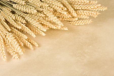 Border frame made of a bunch of wheat and parchment background photo