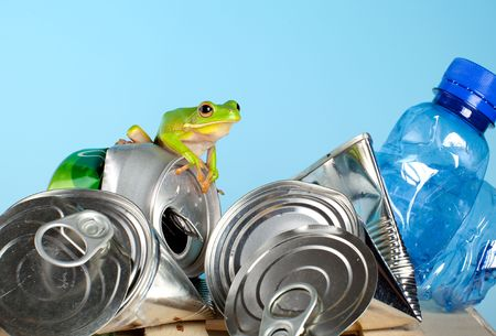 redeye: Environment photo with a green frog on garbage