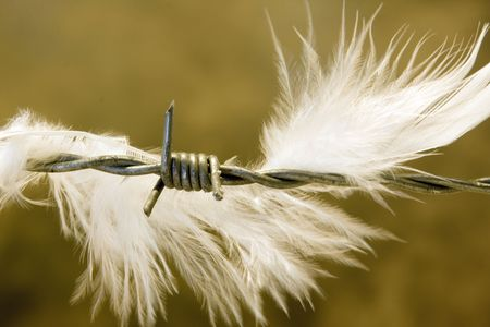 Detail of a white feather on barbed wire Stock Photo - 5218492