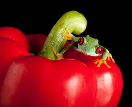 One inch red eyed tree frog on a red pepper