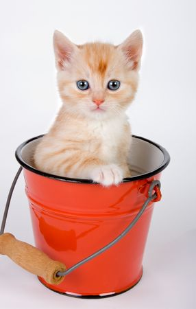 Little red kitten sitting in a red bucket photo