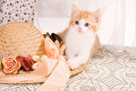 Six weeks old kitten playing with a straw hat photo