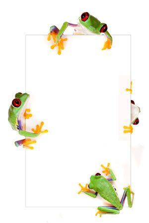 sapo: Joven de ojos rojos rana de �rbol aislado en una p�gina en blanco como marco de la frontera Foto de archivo