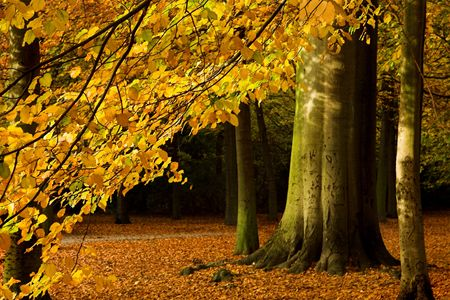 Beautiful branch of an autumn tree in a forest Stock Photo