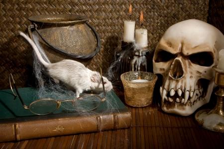 Little white gerbil rat visiting a halloween skull photo