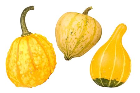Three nice yellow gourds for halloween or thanksgiving Stock Photo - 5506125