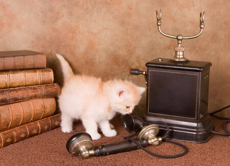 Six weeks old kitten using an antique telephone photo