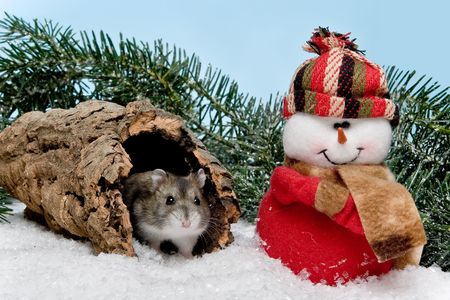 cute hamster: Little gray hamster in snow at christmas Stock Photo
