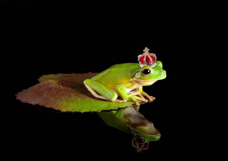 White-lipped tree frog prince with golden crown photo