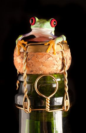 Red eyed tree frog on champagne bottle wishing happy new year 版權商用圖片