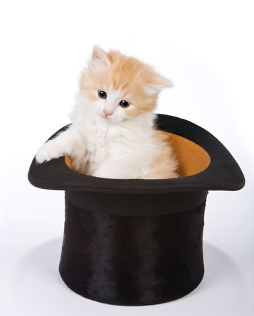 Six weeks old red kitten in a magician photo