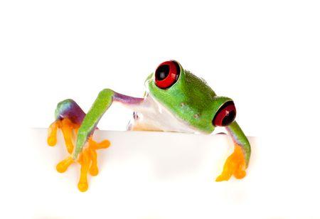 Jonge rode eyed tree frog geïsoleerd op een witte pagina  Stockfoto