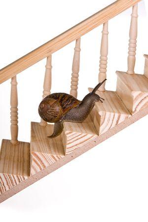 upward struggle: Funny snail slowly climbing a wooden staircase Stock Photo