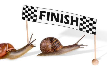 to finish: Funny snails arriving at the finish of a race