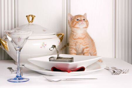Six weeks old kitten trying to keep off the fish on the table Stock Photo - 5905740