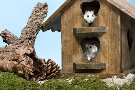 hamsters: Two little hamsters finding a new home