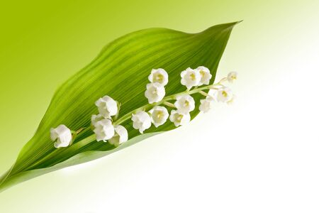 Twig of lilly of the valley against soft pastel background photo