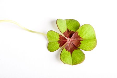 goodluck: Four leaf clover on a white background