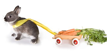 bunnie: Little gray easter rabbit pulling a cart filled with carrots