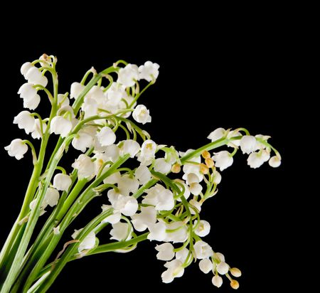 muguet: Bouquet of muguet or lilly of the valley