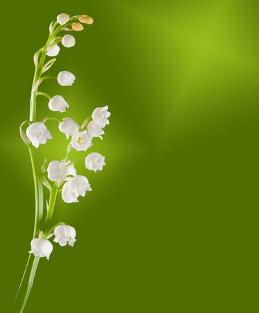 mayflower: Twig of lilly of the valley against a soft green background