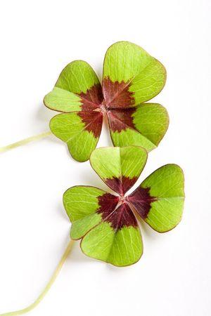 buena suerte: Dos tr�boles de cuatro hojas trayendo suerte dos veces  Foto de archivo