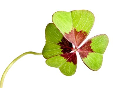 Four-leaf clover lucky symbol isolated on white, Stock Photo - 6252364