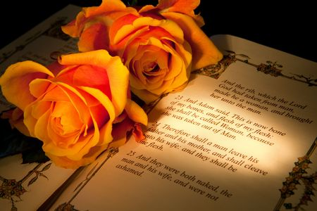 adam: Roses and bible with Genesis text of Adam and Eve, a typical wedding text - the book illustration is copied from a 400 years old bible. Stock Photo
