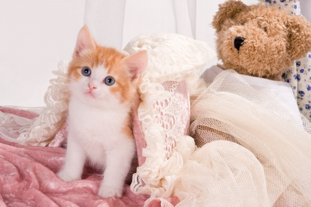 Six weeks old kitten with a teddy bear photo