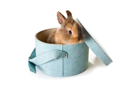 bunnie: Little brown easter bunny in a soft blue box