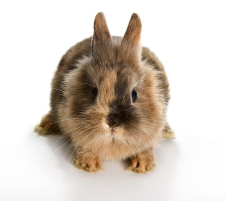 Six weeks old little easter bunny on a white background Stock Photo - 6480688
