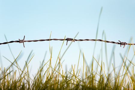 Green grass behind barbed wire symbol of freedom photo