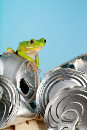 Ecology or environment image of a white-lipped tree frog on garbage photo