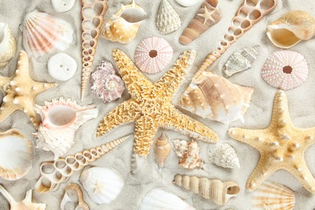 Assorted seashells on a sandy beach filling the frame Stock Photo - 6901250